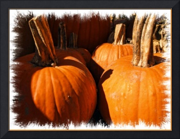 Pumpkin Patch,Large Gourds,Autumn Harvest Colors