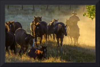 Morning Dust with Horses