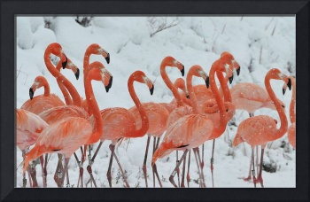 Pink Flamingo Birds During Snowfall
