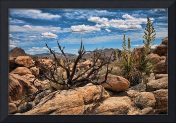 Desert Southwest Landscape with Dead Tree
