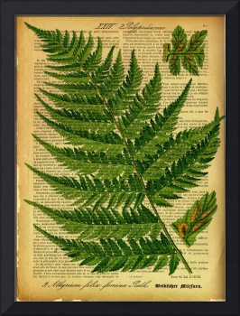 Botanical Print on old book page