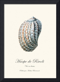 Sea shell harpe vintage poster natural history