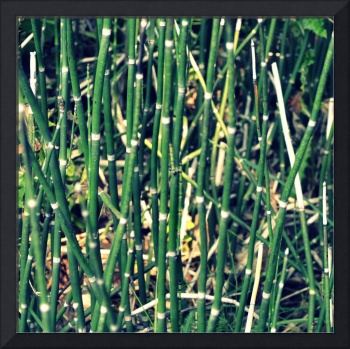 Snake Grass on the Beach