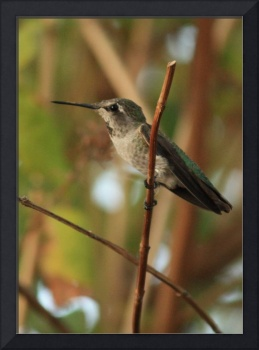 Hummingbird with Two Branches