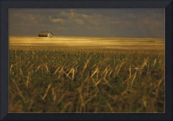 An Old Barn In A Field, Tofield, Alberta, Canada