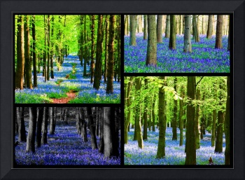 Bluebell Collage