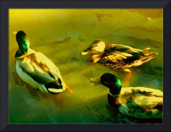 Three Ducks on Golden Pond