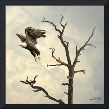 Eagle Flying Before the Storm