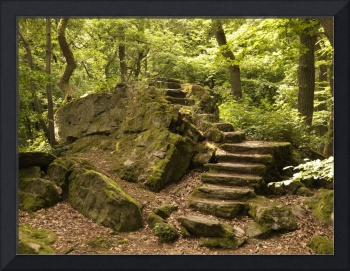 stair in the woods