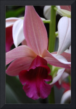Orchid Show 09 146
