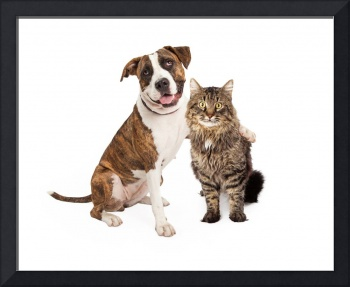 Dog Arm Around Tabby Cat