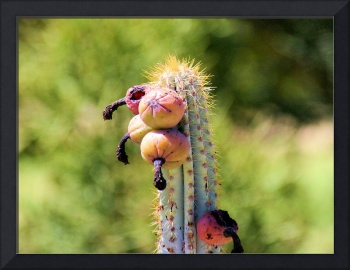cactus with tassles and balls 2