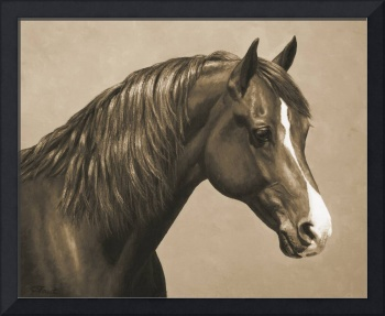 Chestnut Morgan Horse In Sepia