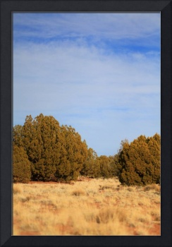 High Desert Landscape with Juniper