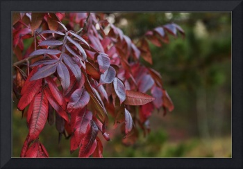 Smooth Sumac at Sunset by Jim Crotty