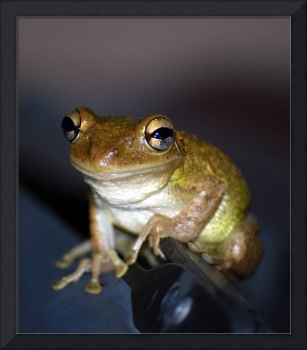 frog7