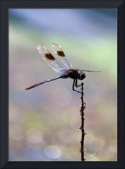 Summer Dragonfly with Peaceful Pond b
