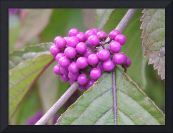 really purple berries