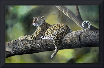 African Leopards on a tree branch