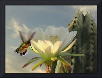 Hummingbird and Cactus