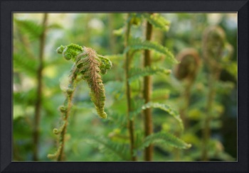 Ferns Green Fern Fronds Forest Art Photography