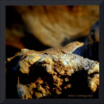 A Brown Anole Lizard