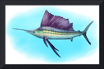 Indo-Pacific Sailfish