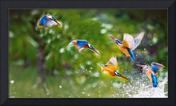 Kingfisher Birds, Taipei, Taiwan