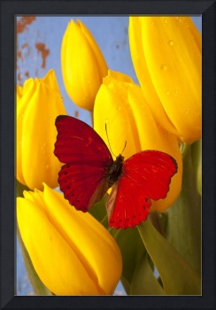 Red butterful on yellow tulips