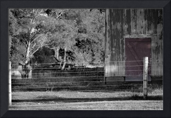 Cow Barn and Red Door Black and White