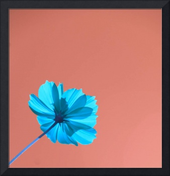 Blue Flower, Tan Sky