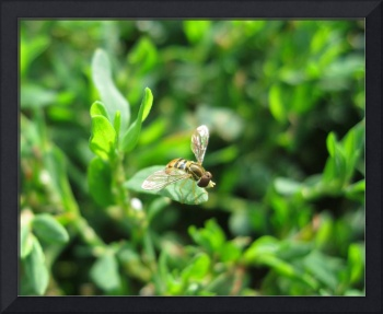 Small Bee (landscape)