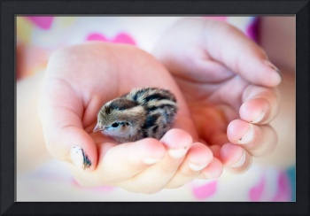 Girl Holds Baby Quail in Her Hands
