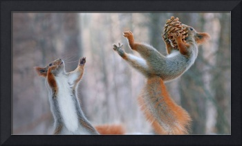 Endangered Eurasian Red Squirrels In Action