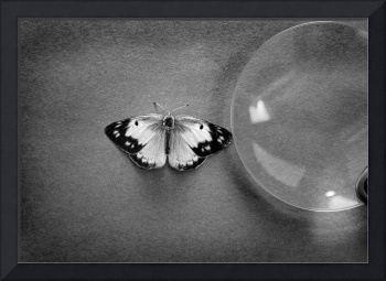 Butterfly Discovery Black and White