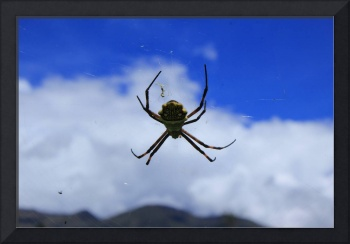 Orb Weaver Spider Against Blue Sky