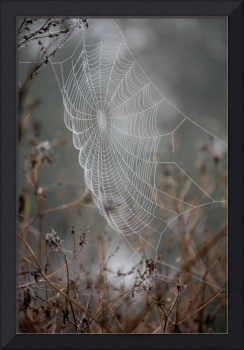 The Perfect Dream Catcher Web