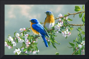 Blue Birds In The Cherry Blossoms