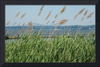Reeds and Tappan Zee