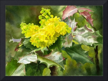 Oregon Grape Wildflowers with Leaves