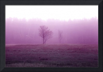 Foggy Field- Freeport, ME (Infrared)