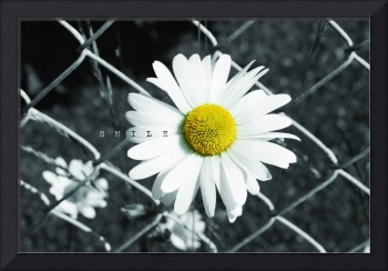 CanvasComposite-DaisyFence