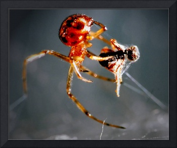 Spider And Prey Enlarged