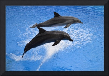 Dolphins Leaping Out Of Water