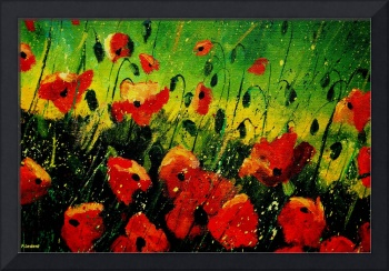 red orange poppies 5623