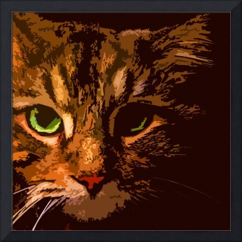Maine Coon Cat in Shadows