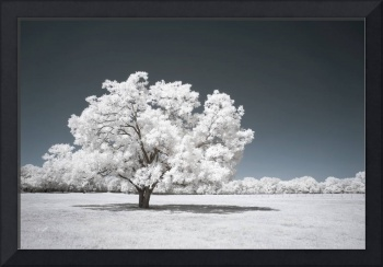 alone time - infrared tree landscape