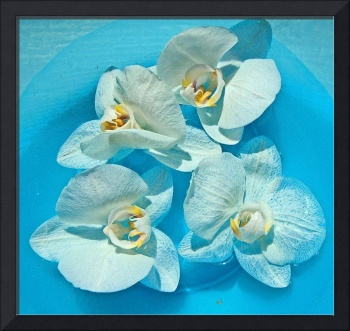 My Orchids - Special Effect :)