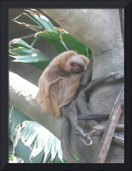 Smilling Sloth