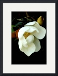 Southern Magnolia by Jacque Alameddine